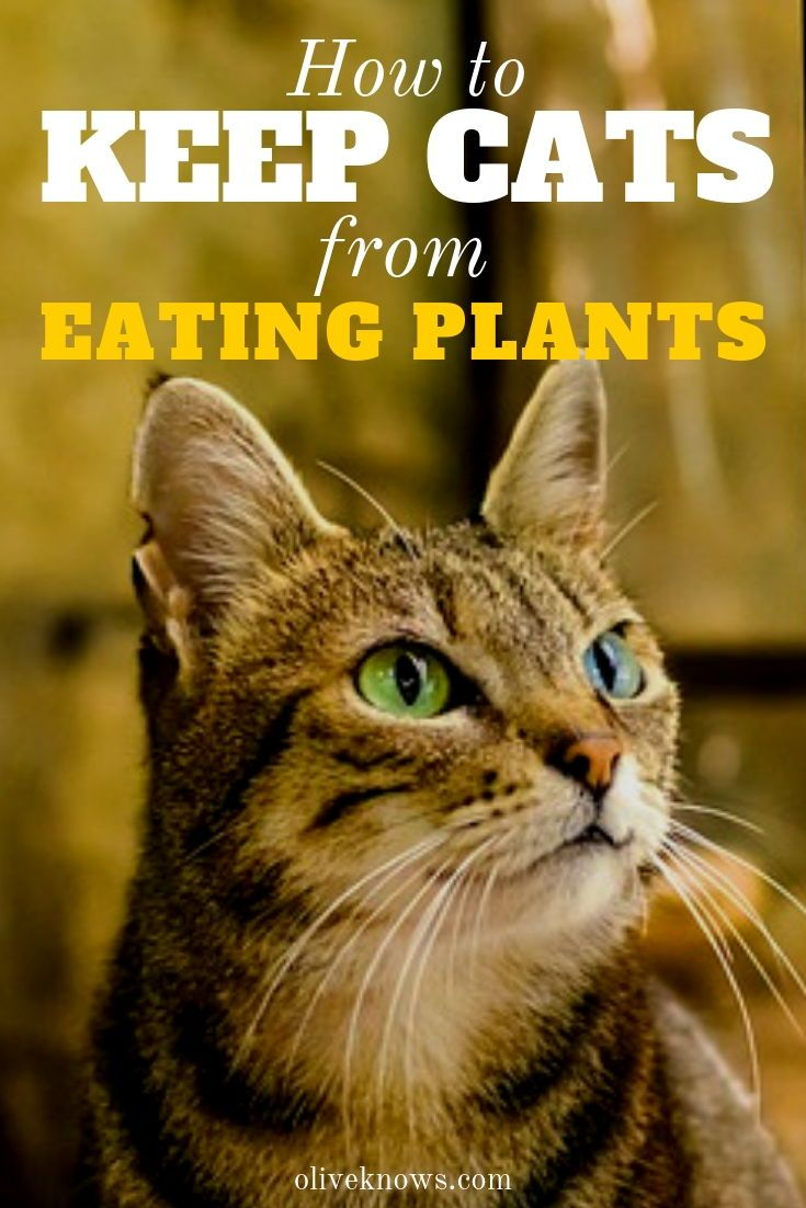 How to Keep Cats from Eating Plants Cats Cat plants