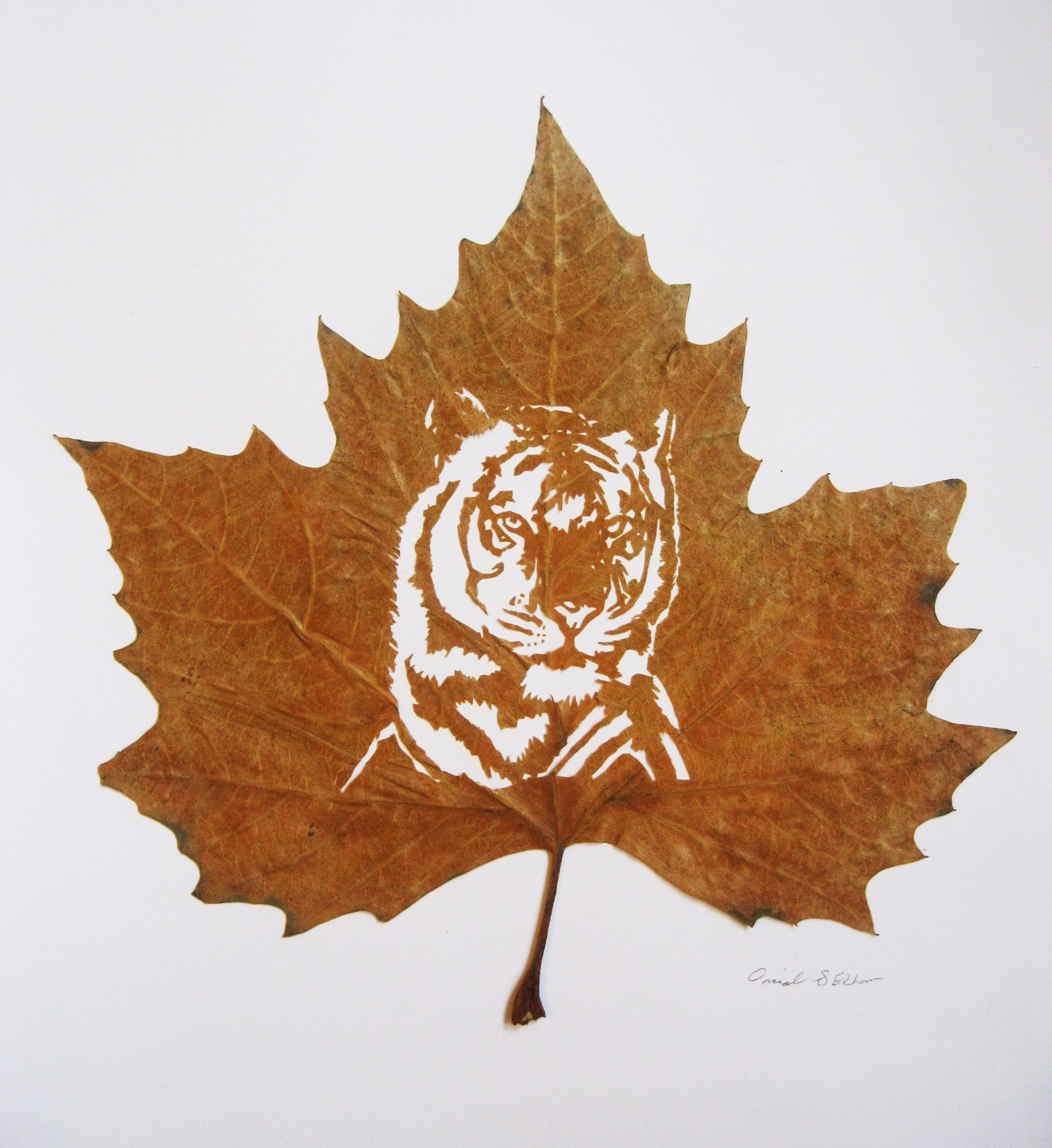 LEAF CUT ART BY:OMID ASADI
