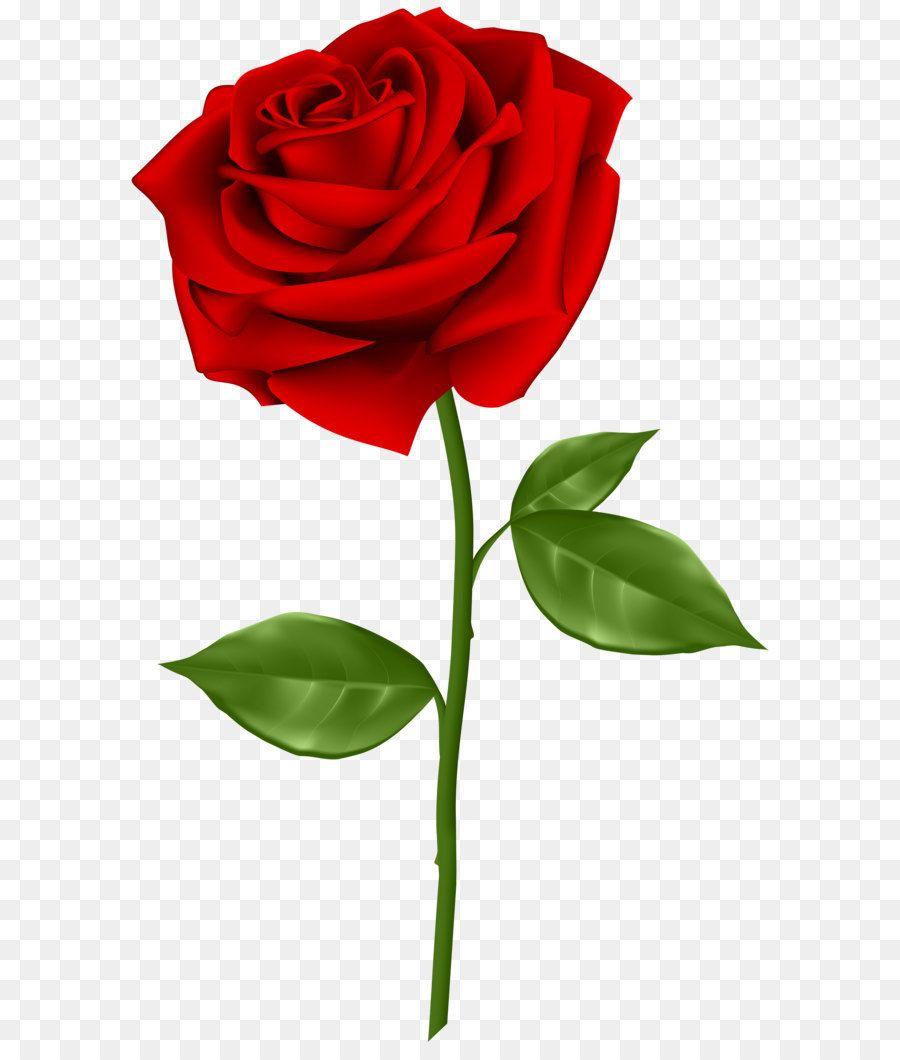 Blue Rose Clip Art Red Rose Transparent Png Clip Art Flower Png Images Red Background Images Banner Background Images