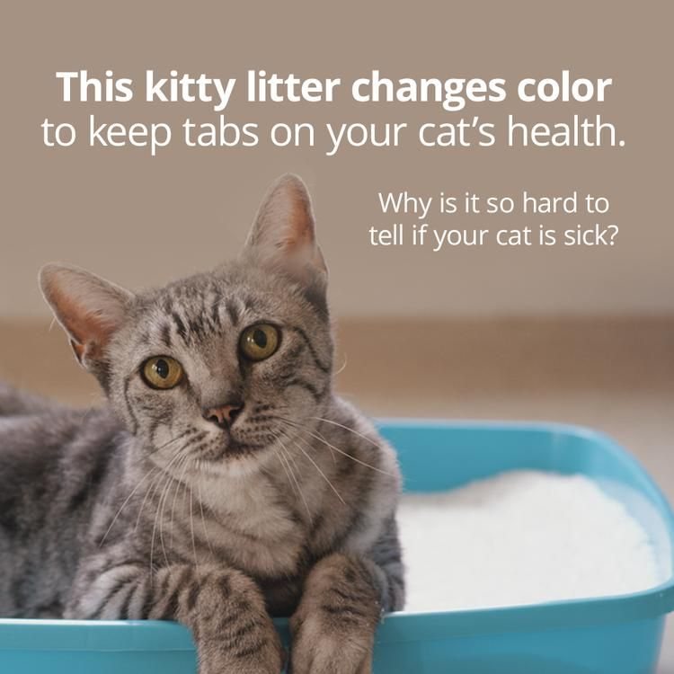 This Kitty Litter Changes Color To Gauge Your Cat S Health Animal