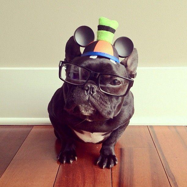 nerd Trotter