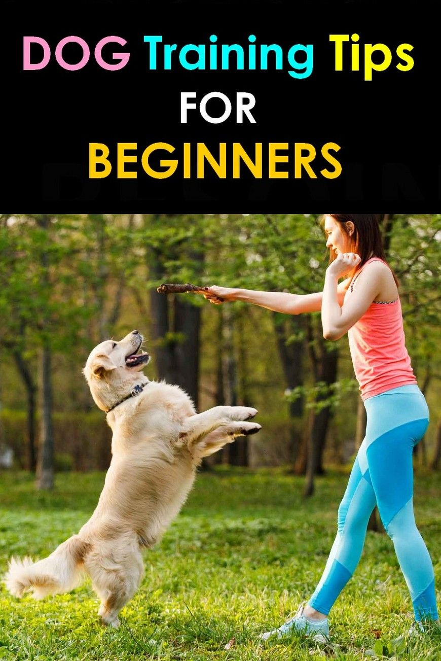 Download Dog Training Tips For Beginners Pdf Videos Dog