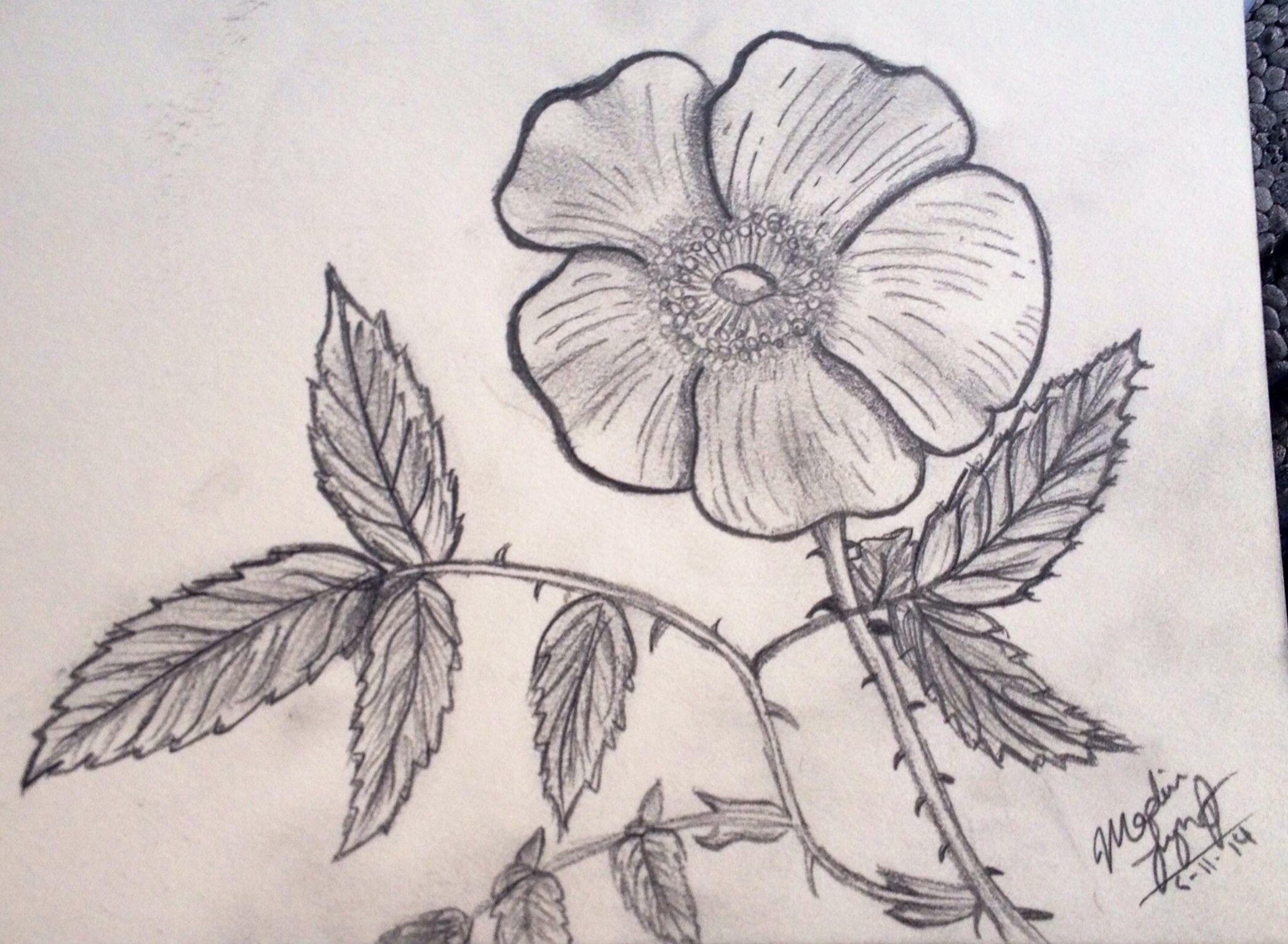 Kipper a flower for grandma drawings pinterest fun