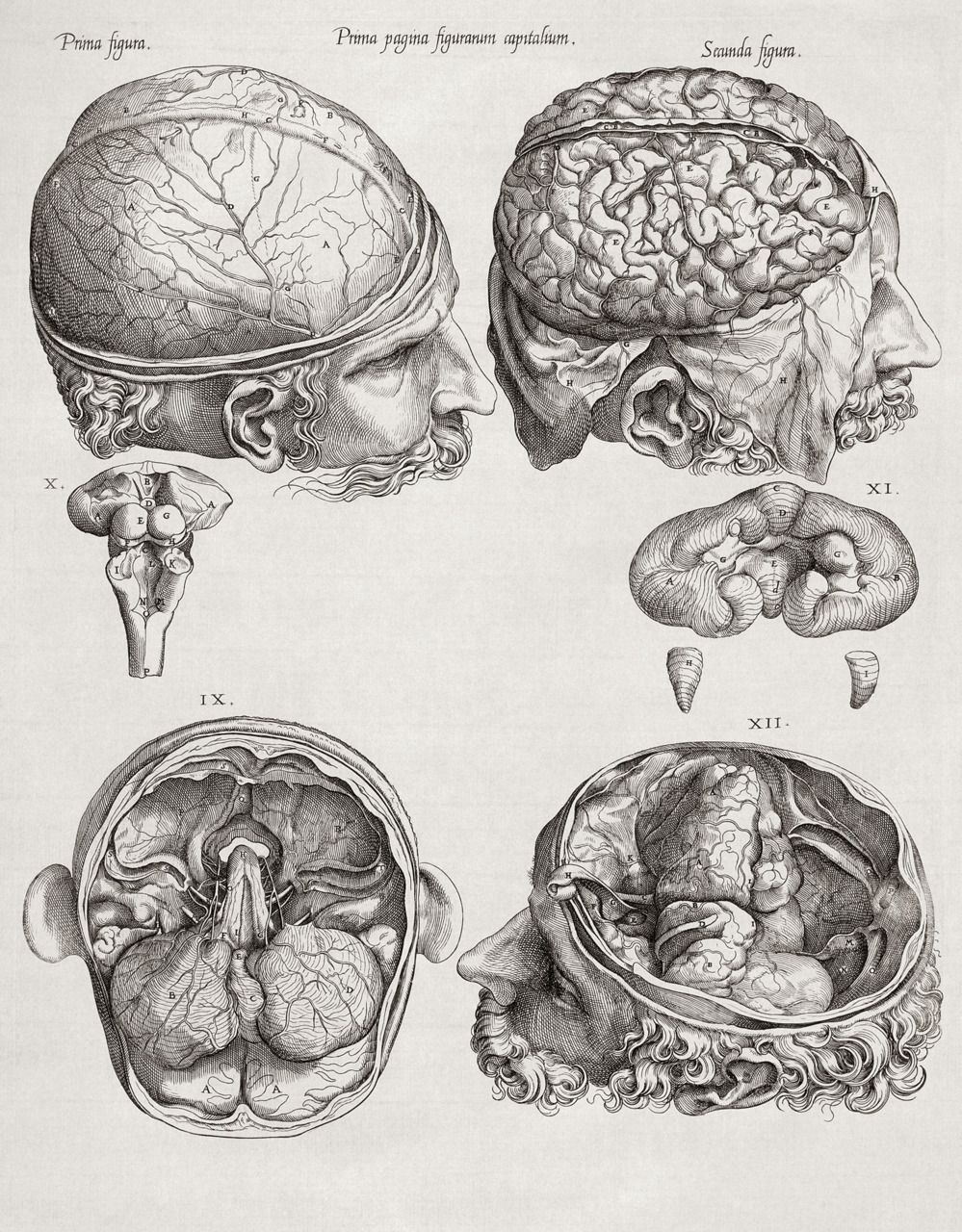 Pin by Mark Klein on Brain Cavity | Pinterest | Anatomy ...