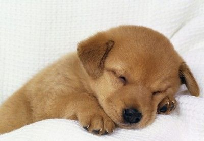 Why I Love Puppies Image By Free Spirit Designs Baby Animals