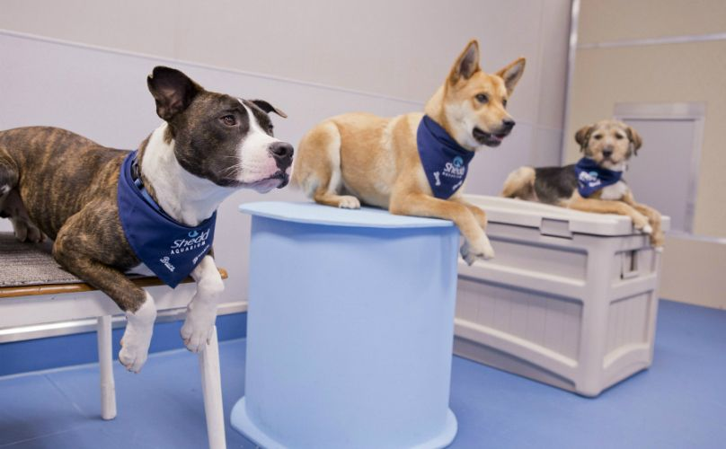 Chicago Aquarium Adopts Rescue Dogs And Gives Them Oceans Of Love Rescue Dogs Chicago Aquarium Dogs