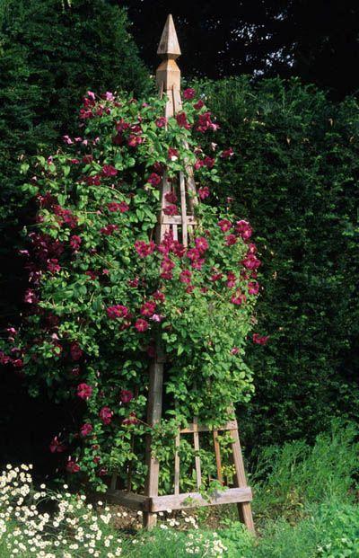 Clematis Viticella Mme Julia Correvon Growing On Obelisk By John Glover Gartenspaliere Pflanzen Garten