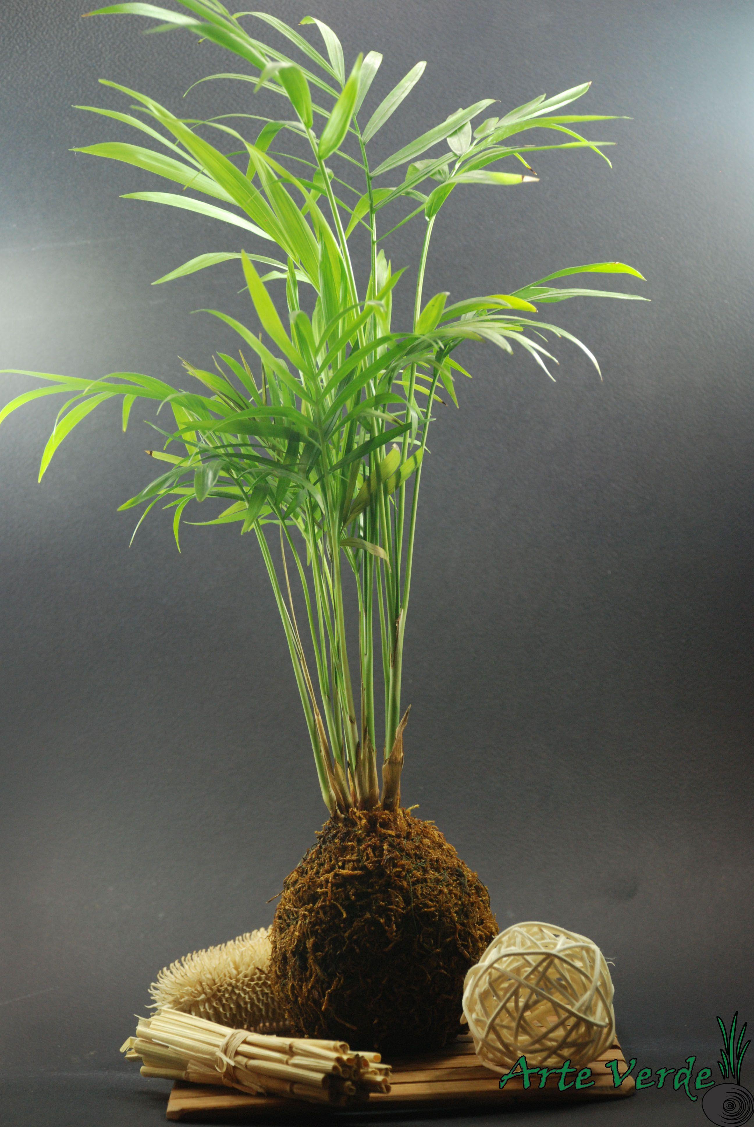 Floating Bonsai Plant