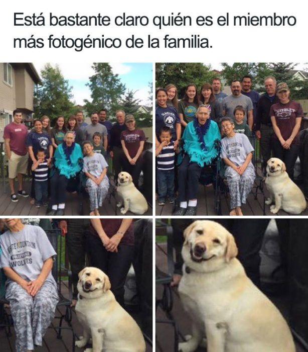19 Divertidos y geniales memes de perros que te harán sonreír por el resto del día