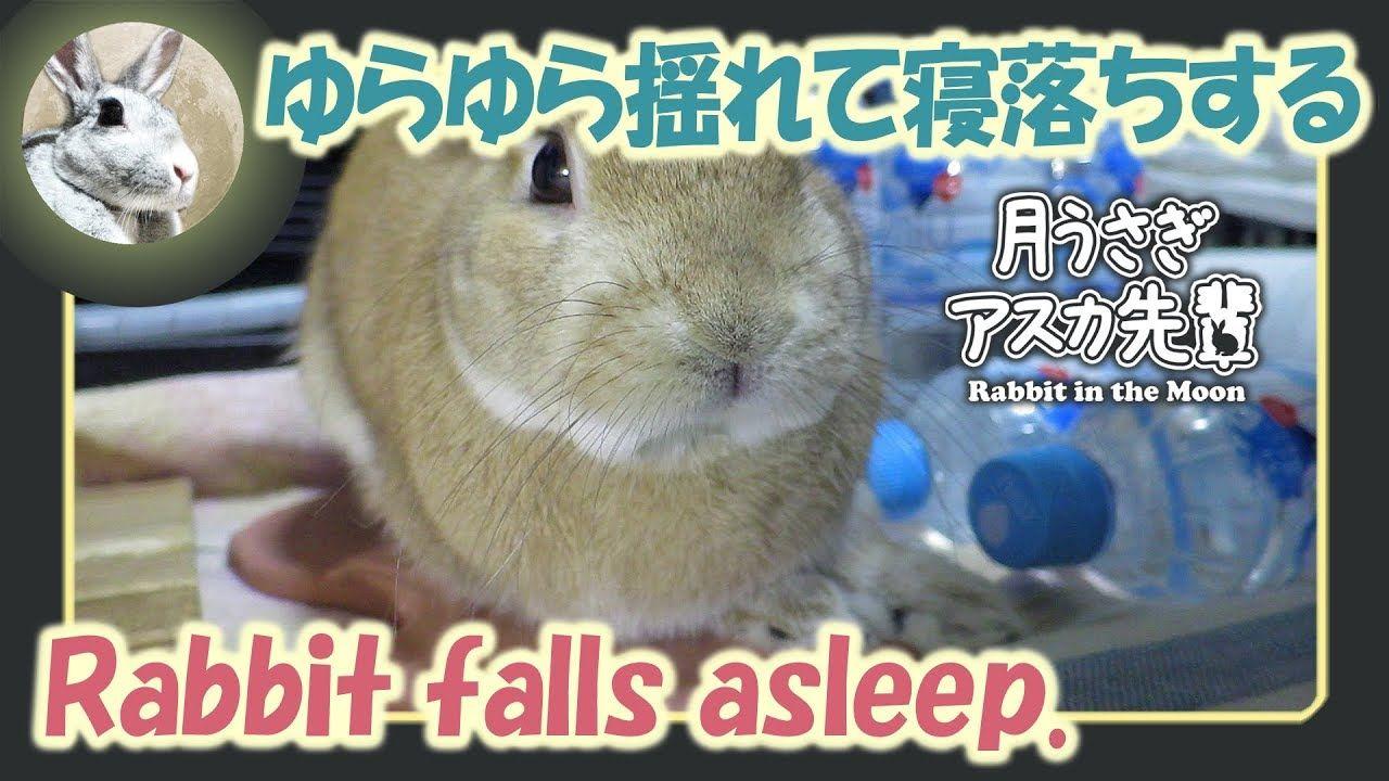 ゆらゆら揺れて寝落ちする ウサギのだいだい 2018年8月9日 眠りにつく ウサギ 居眠り