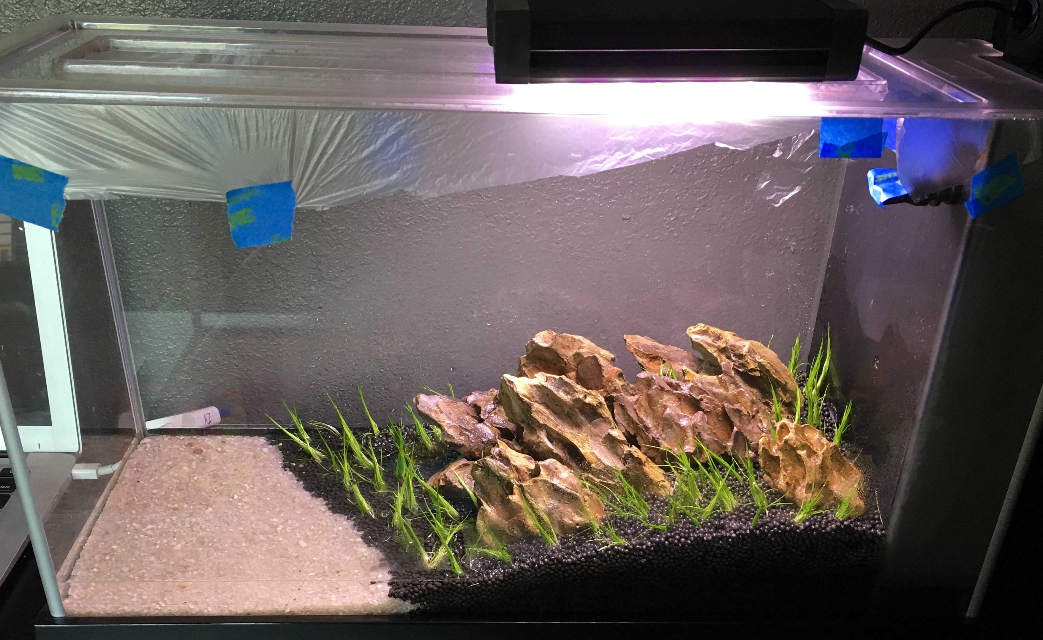 Great Starting Up The Fluval Spec V Again. Dragon Stone Hardscape And Dwarf  Hairgrass Only.