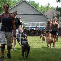 Training Socialization For Almost Home Almost Home No Kill