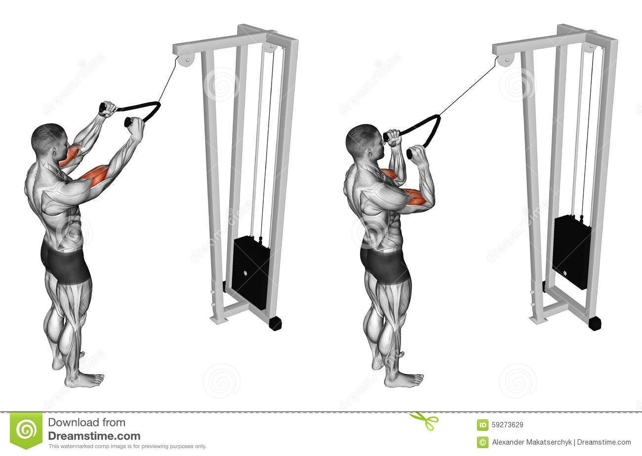 exercising-pulldown-exercise-muscles-biceps-bodybuilding ...