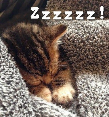 Sssshhh! You might wake up kitty.
