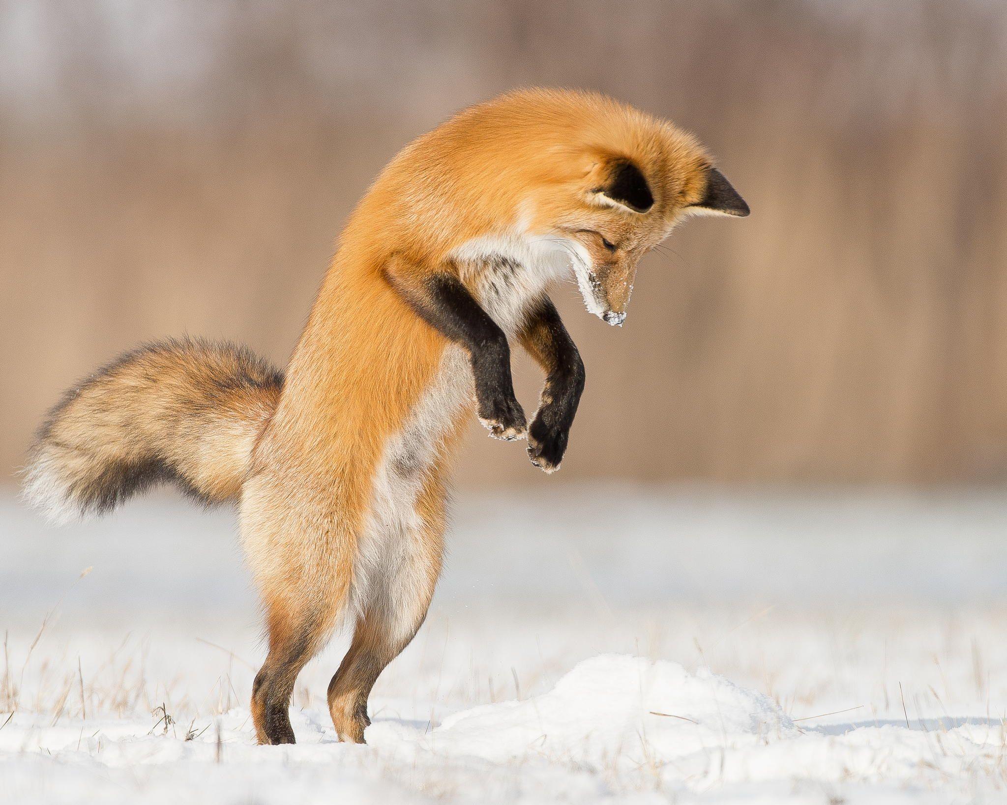 Jump by Maxime Riendeau - Photo 53668244 - 500px
