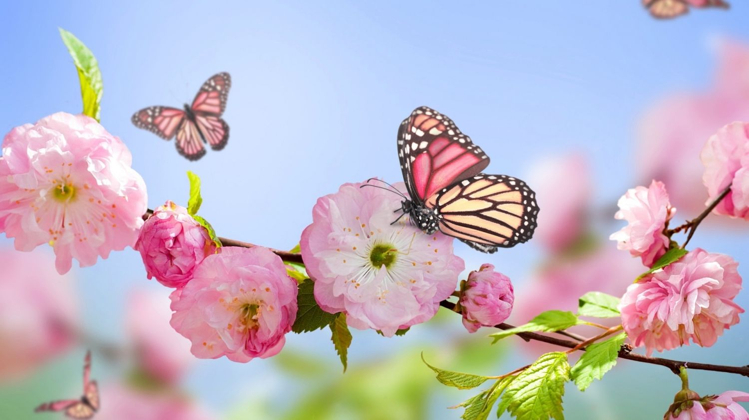 Pink Flowers Blooms And Butterfly Wallpaper