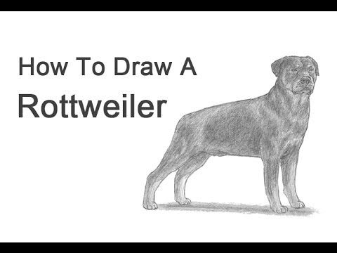 How to Draw a Dog (Rottweiler) - YouTube | Dog drawings