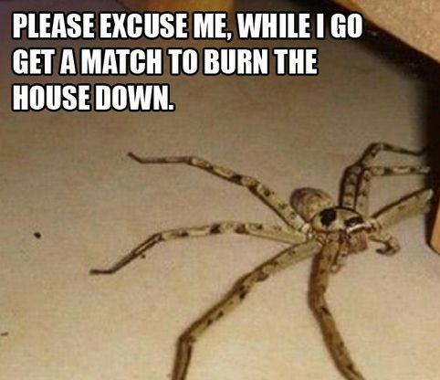 Giant scary spiders memes - photo#37
