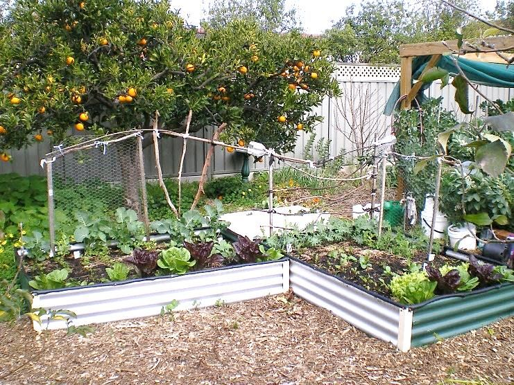 Right angel Vegetable Garden Design Australia