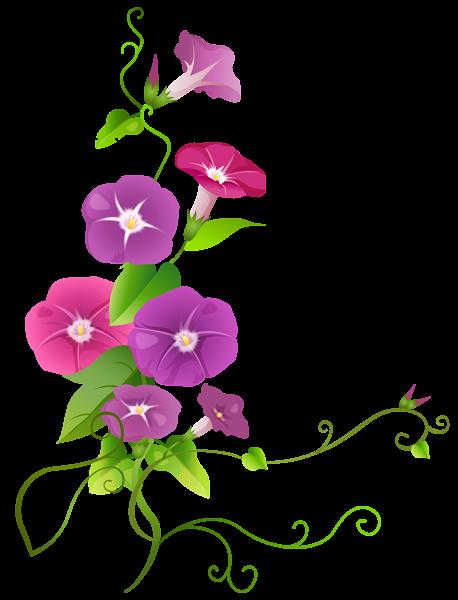 ipomoea flower transparent png clip art image flower designes rh pinterest com
