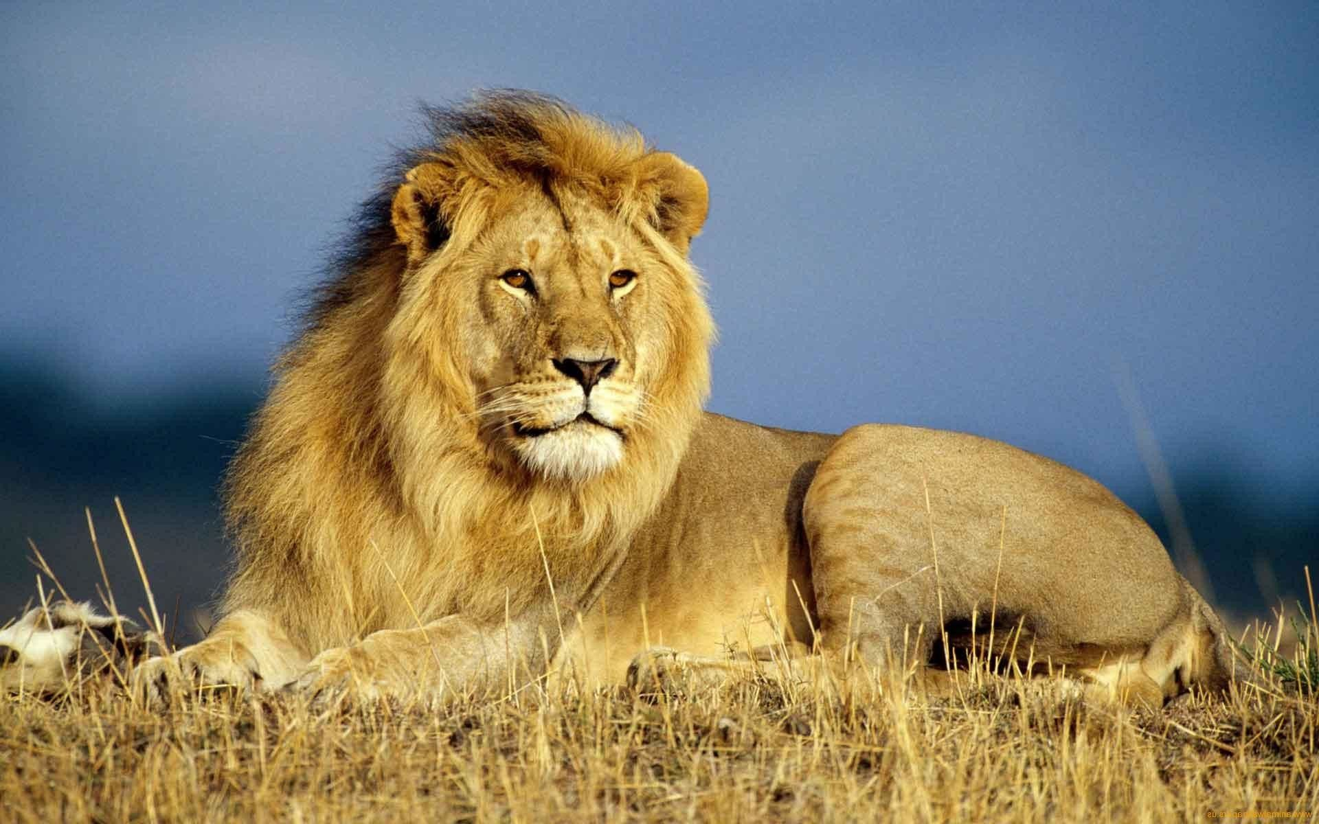 African Wildlife Wallpapers