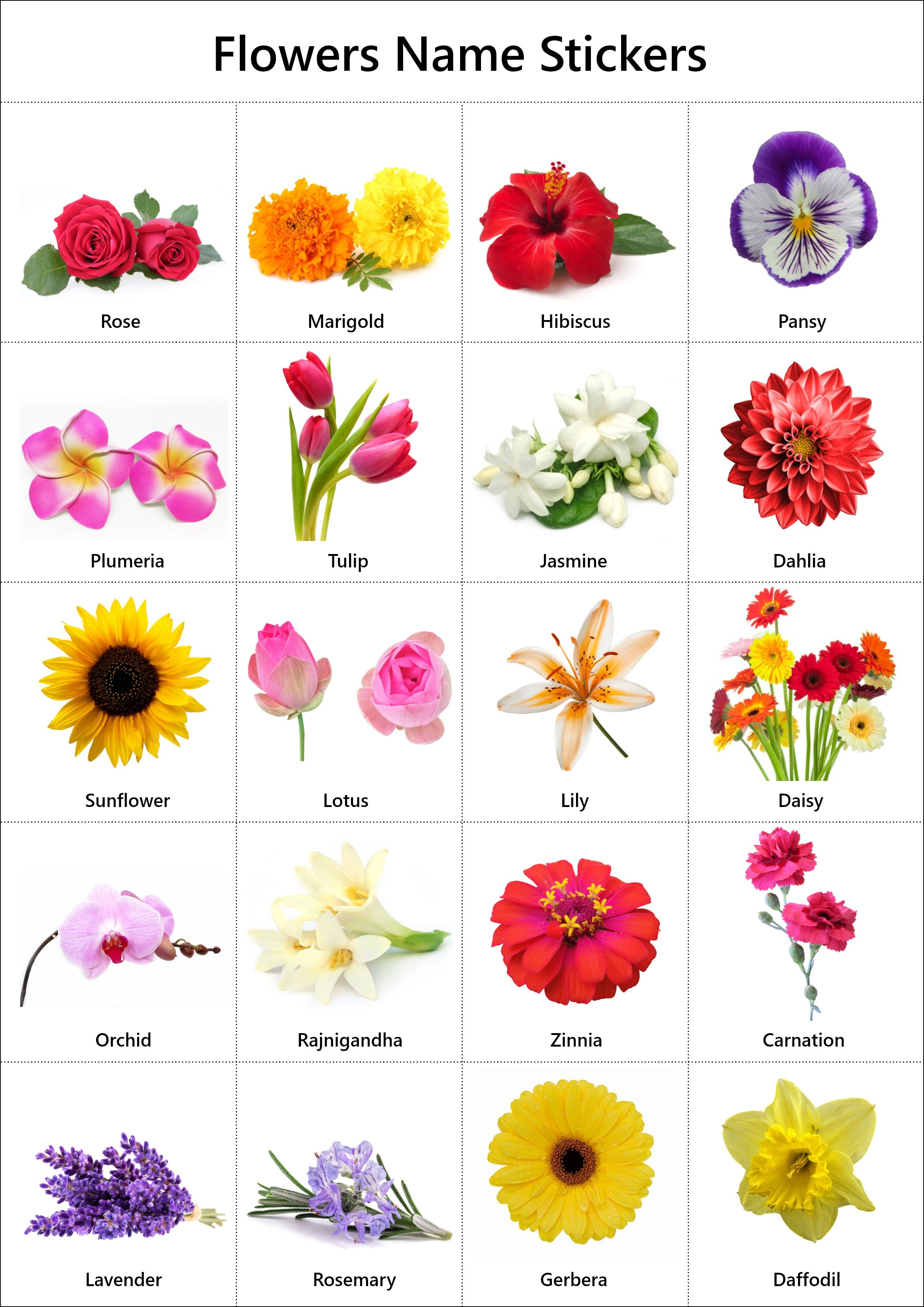 Flowers Name In English Pictures