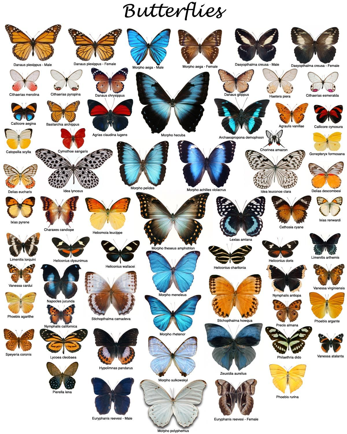 i love butterflies but real ones not like mariah carey color