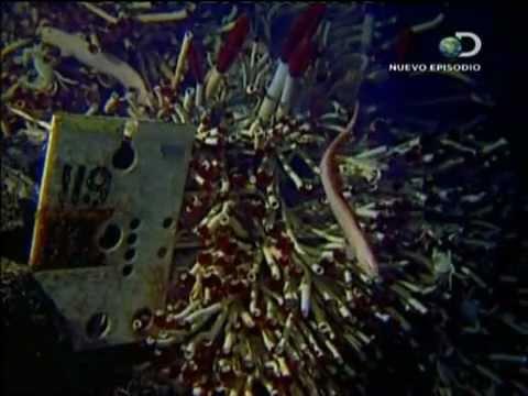 Criaturas Tenebrosas Discovery Channel www.locutor.pro