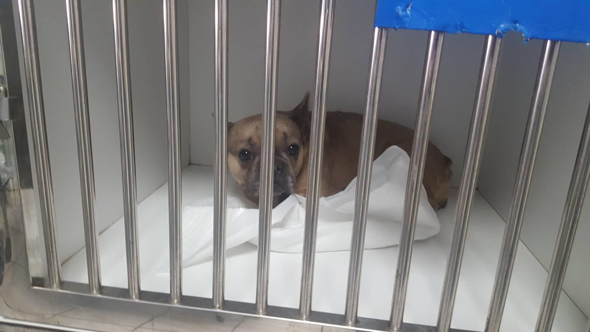 Djeta At The Vet Saved By A Small Private Dog Shelter Boss Kokos