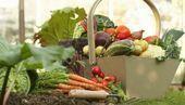 40 Gemüsegarten für Anfänger Ideen # Anfänger # Garten # Ideen #vegetable, …. – winter garden