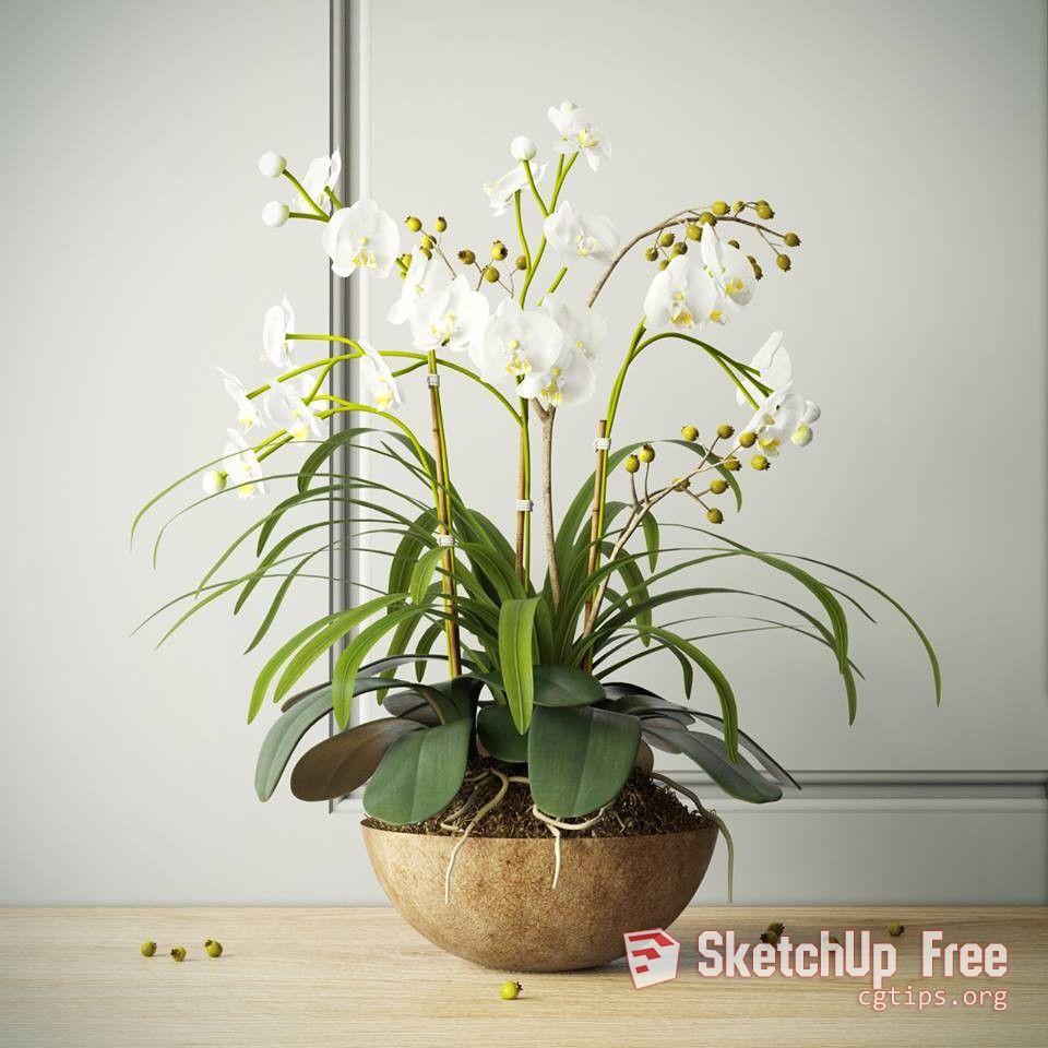 1452 Plant Sketchup Model Free Download   Sketchup Free Download