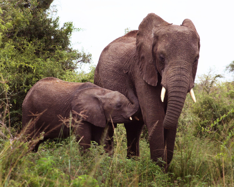 Nashorn der Totenwache