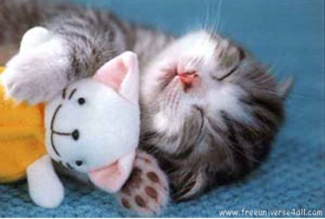 Pin By Pamela Dehart On Really Pinterest Gatos Animales And Amor
