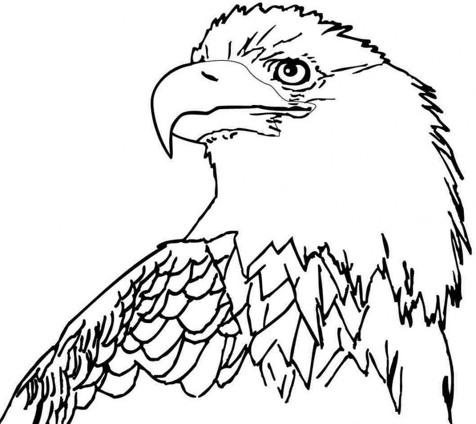 Free Bald Eagle Coloring Pages   AZ Coloring Pages