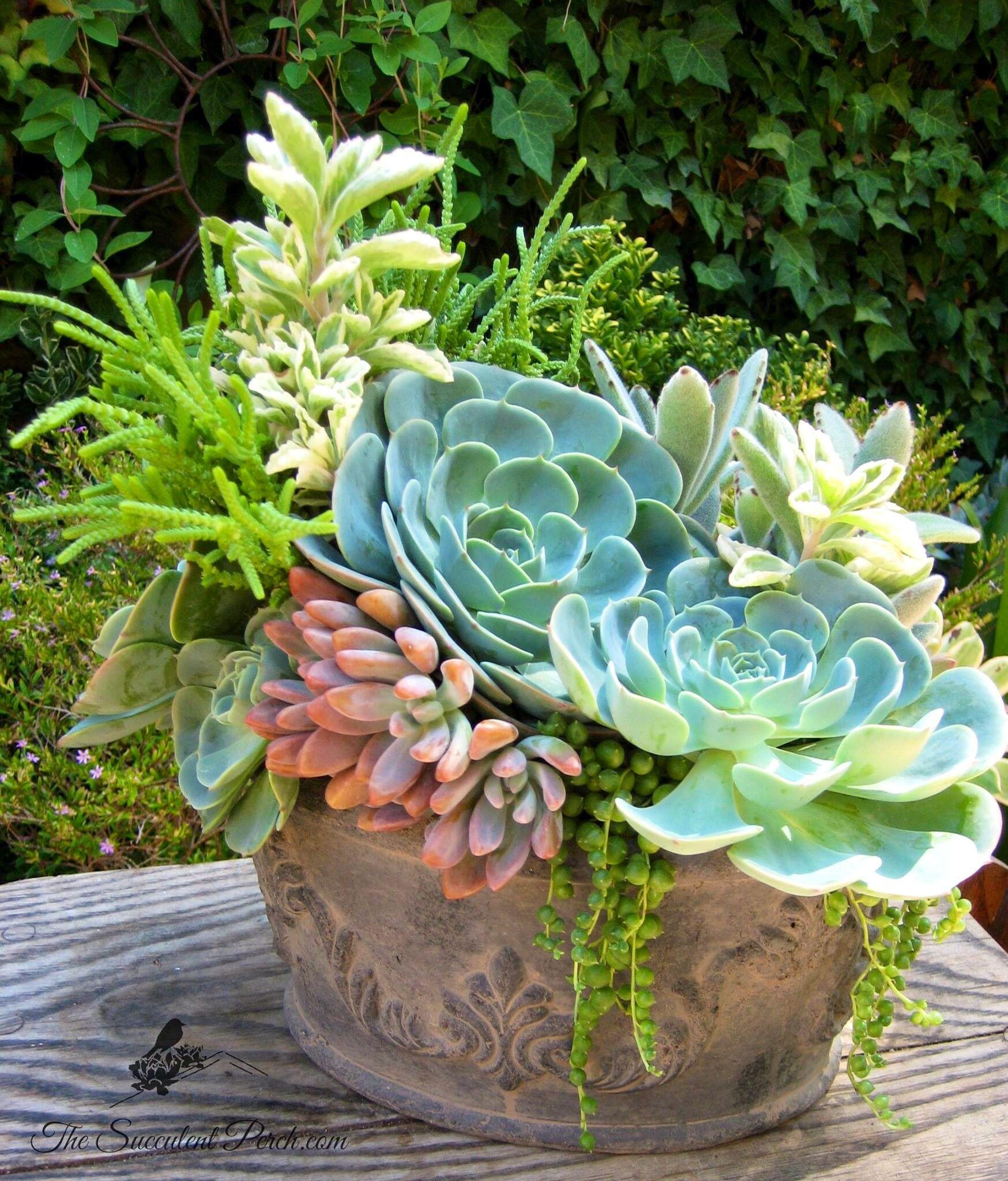 Discover Ideas About Succulent Plants