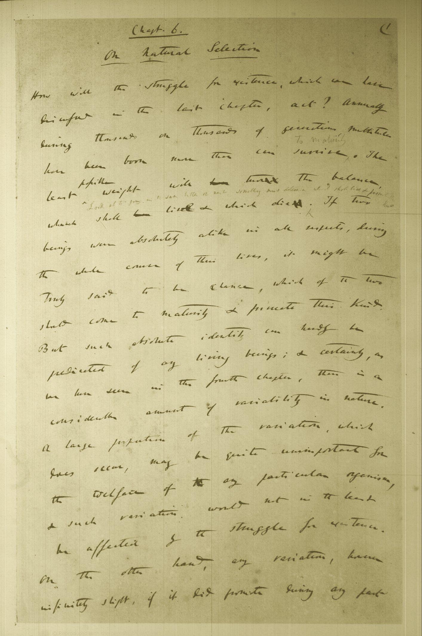 Origin Of Species Manuscript Carnet Lettre A Illustrations