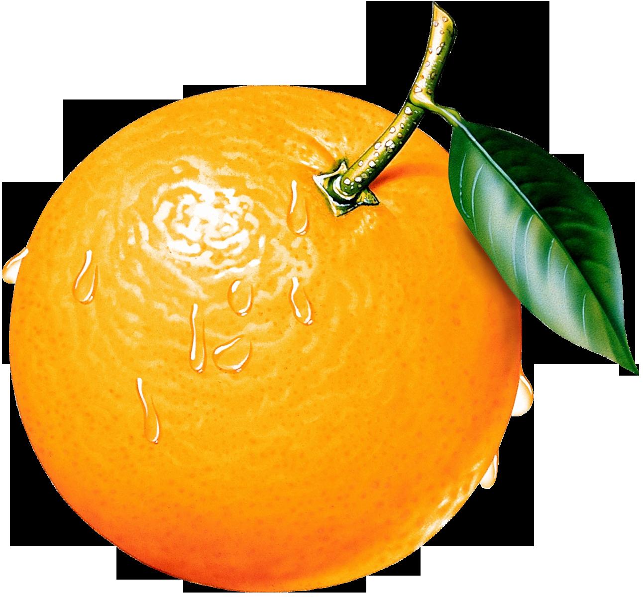 Orange Clipart Images 9 Clip Art Orange Orange Fruit