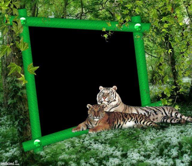 Imikimi Nature Photo Frame Google Search Fotolijstjes