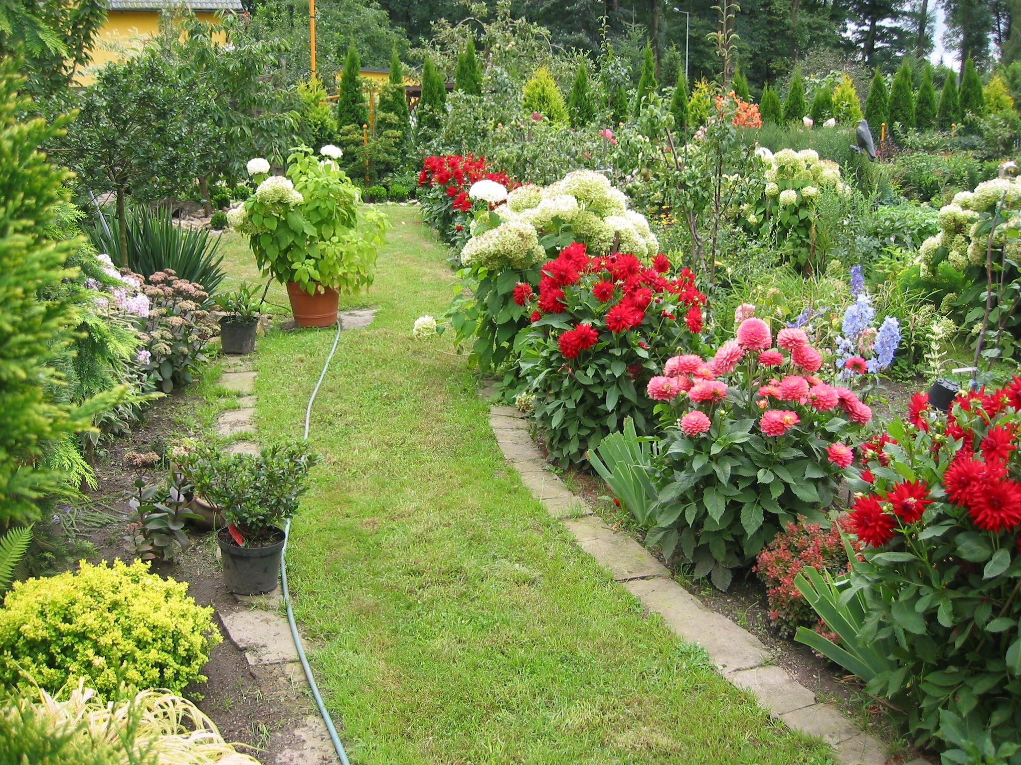Pin By Helena Marszalek On Kwiaty Z Mojego Ogrodu Most Beautiful Flowers Garden Beautiful Flowers