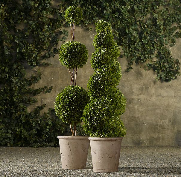 Preserved Boxwood Topiary $265 | flores entrada | Pinterest