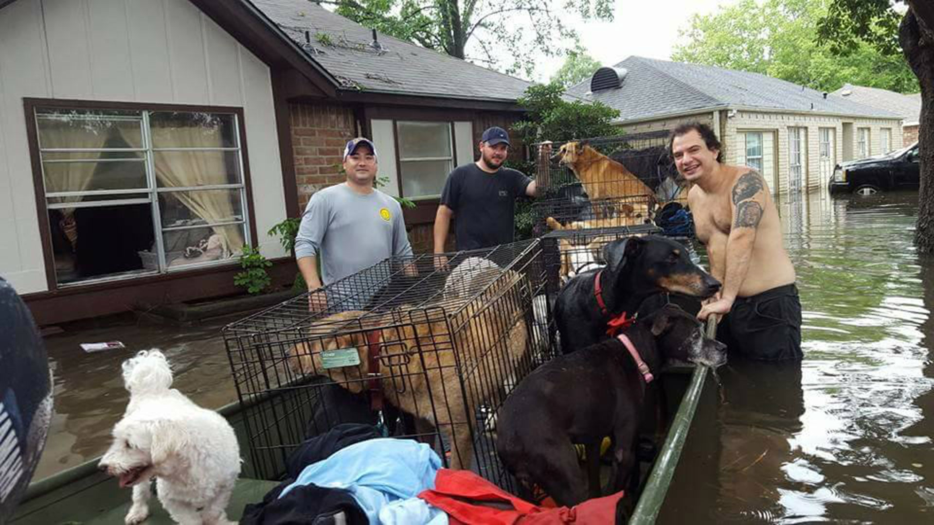 Meet The Woman Who Refused To Abandon 20 Dogs To Harvey Devastation With Images Dogs Dog Lovers Kindness To Animals