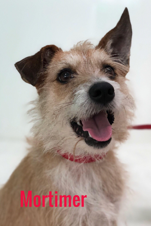 Adopt Mortimer on Petfinder Animal welfare society