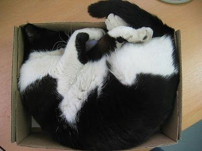 Cats and boxes, part 2