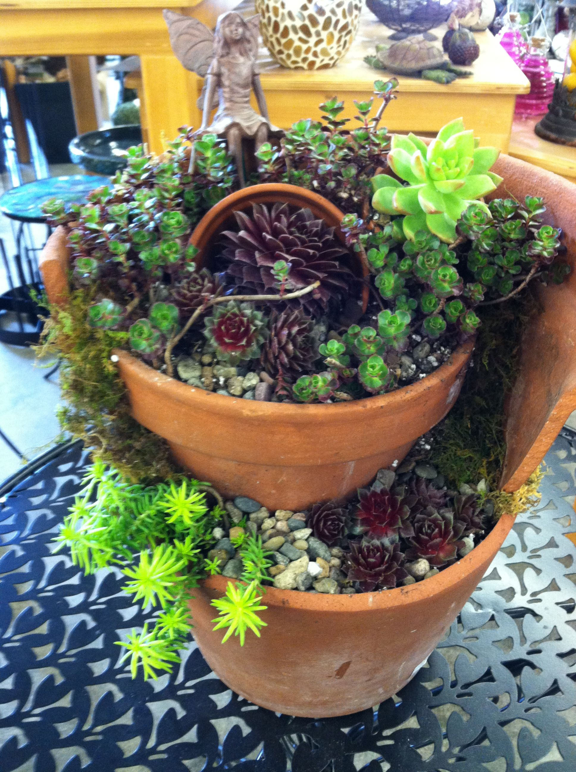 Succulent Fairy Garden By Kristin Middleton #Colonialgardenskc