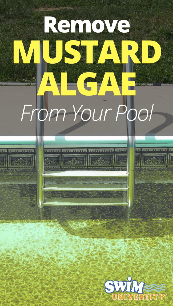 How To Get Rid Of Mustard Algae In A Pool Mustard Algae