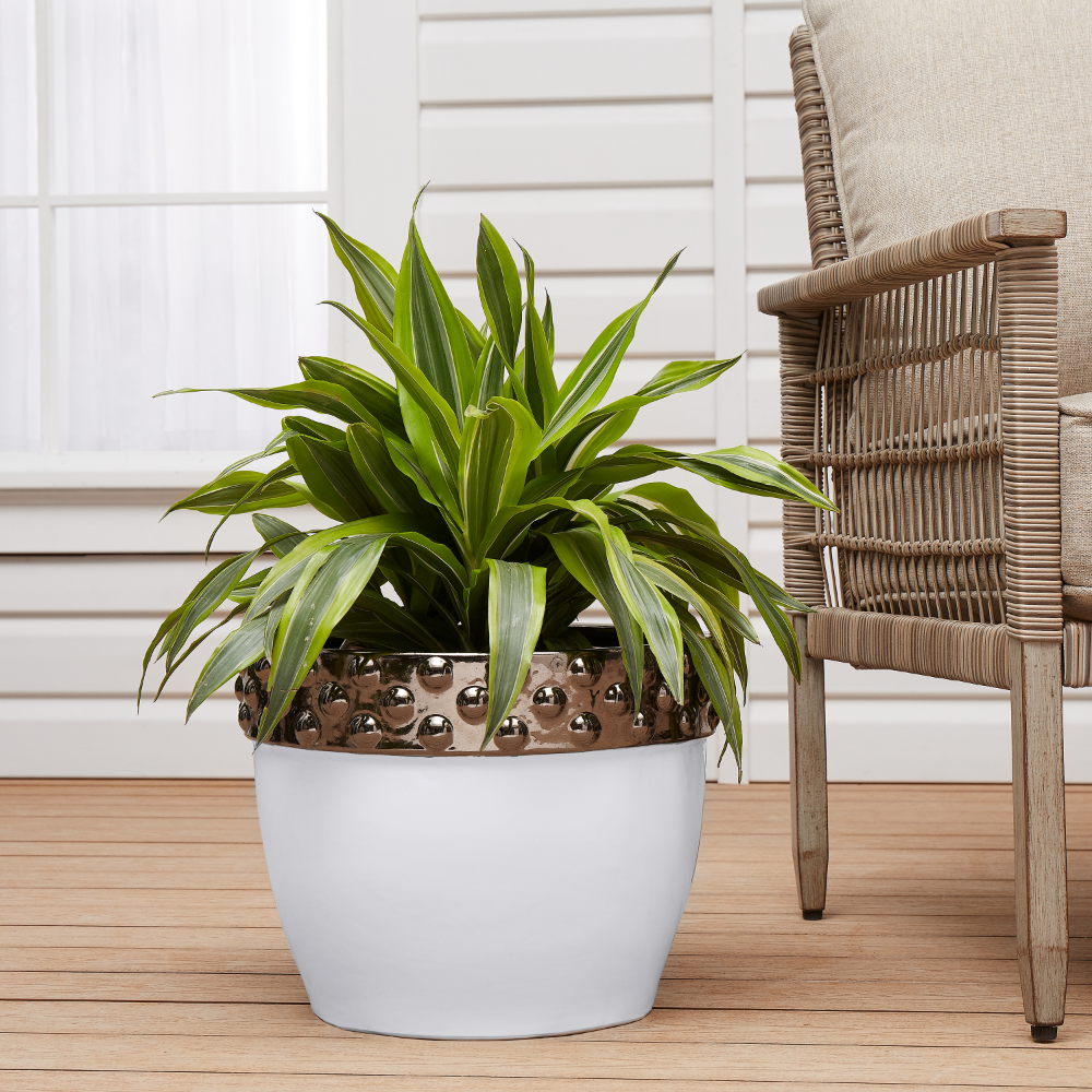 cda6fe576867d44081918bfa6abcc34b - Better Homes And Gardens Plants For Sale