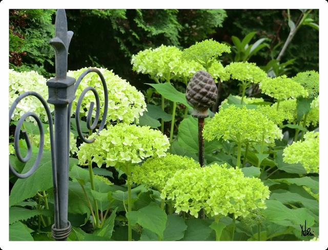 hortensie annabelle hortensien pinterest. Black Bedroom Furniture Sets. Home Design Ideas