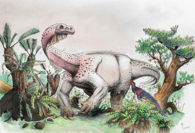 Bones Reveal The Brontosaurus Had An Older, Massive Cousin