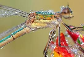 Image result for psychedelic dragonfly