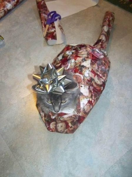 how to gift wrap a cat